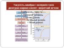 Текучість мембран і експресія генів десатураз жирних кислот: зворотний зв'язок