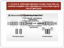 У клітинах B. subtilis ідентифікована гістидин-кіназа Desk, що сприймає холод...