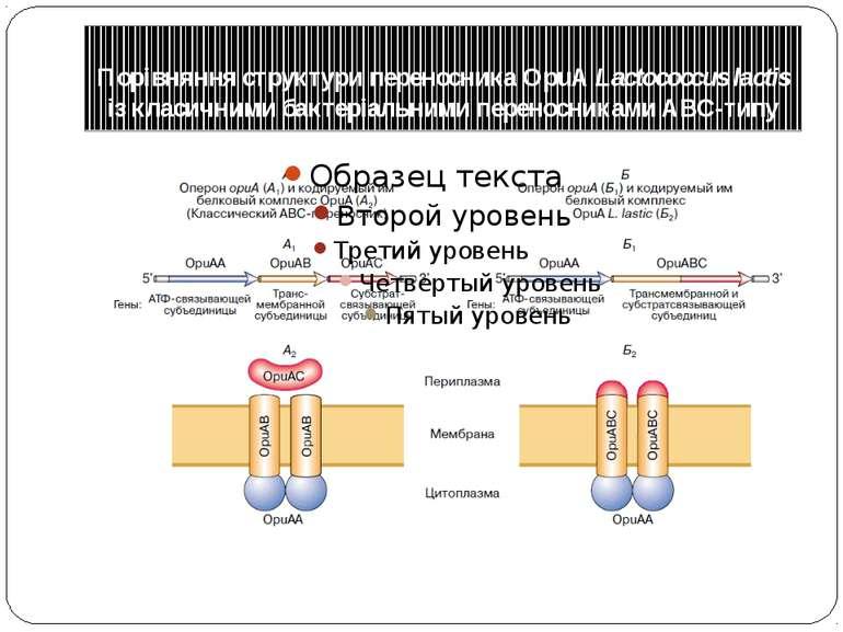 Порівняння структури переносника OpuА Lactococcus lactis із класичними бактер...