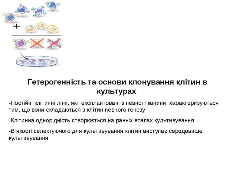 Гетерогенність та основи клонування клітин в культурах -Постійні клітинні лін...