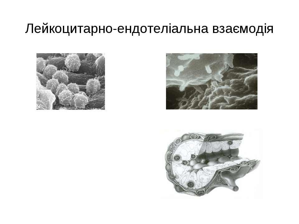Лейкоцитарно-ендотеліальна взаємодія