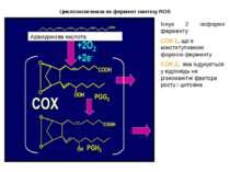 Циклооксигеназа як фермент синтезу ROS ROS Існує 2 ізоформи ферменту: СОХ-1, ...