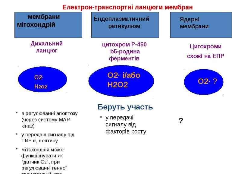 Електрон-транспортні ланцюги мембран Дихальний ланцюг цитохром P-450 b5-родин...