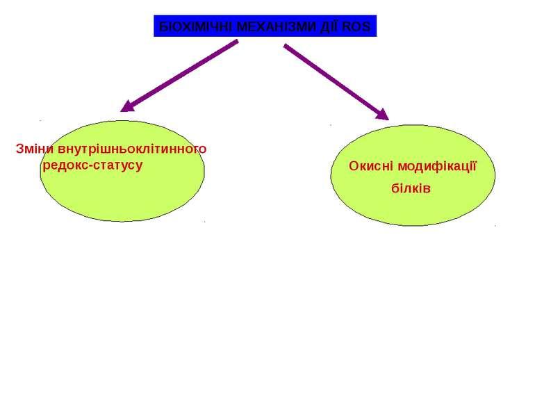 БІОХІМІЧНІ МЕХАНІЗМИ ДІЇ ROS Окисні модифікації білків Зміни внутрішньоклітин...