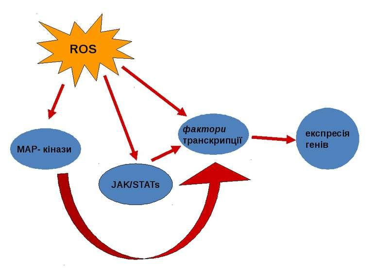 MAP- кінази фактори транскрипції JAK/STATs експресія генів