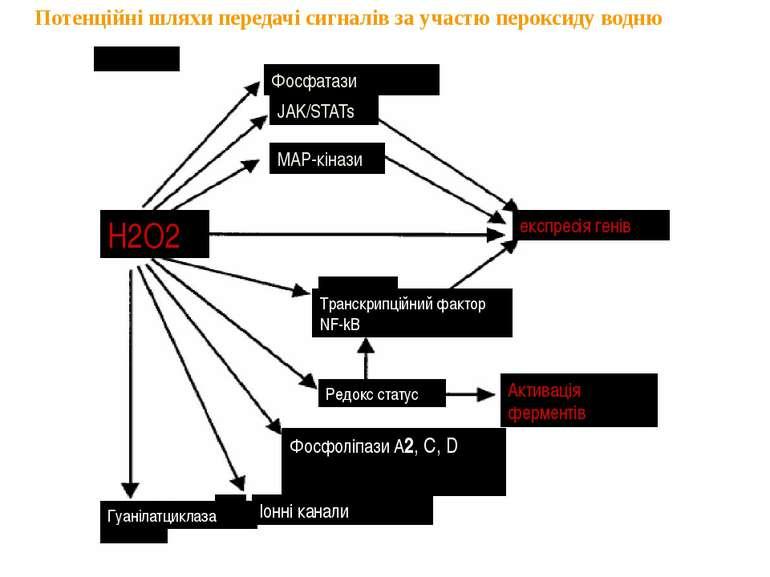 Потенційні шляхи передачі сигналів за участю пероксиду водню Фосфатази JAK/ST...