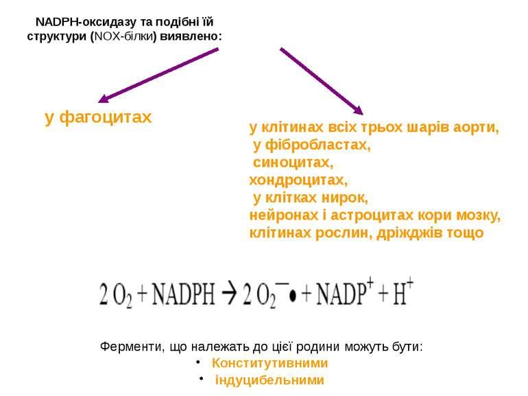 NADPH-оксидазу та подібні їй структури (NOX-білки) виявлено: Ферменти, що нал...
