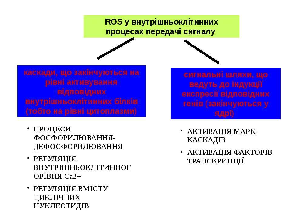 ROS у внутрішньоклітинних процесах передачі сигналу каскади, що закінчуються ...