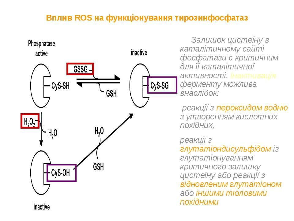 Вплив ROS на функціонування тирозинфосфатаз Залишок цистеїну в каталітичному ...