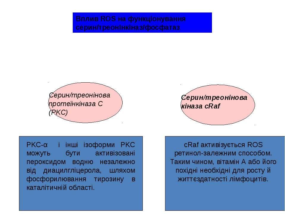 PKC-α і інші ізоформи PKC можуть бути активізовані пероксидом водню незалежно...