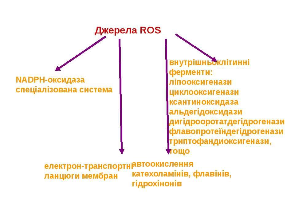 Джерела ROS NADPH-оксидаза спеціалізована система внутрішньоклітинні ферменти...