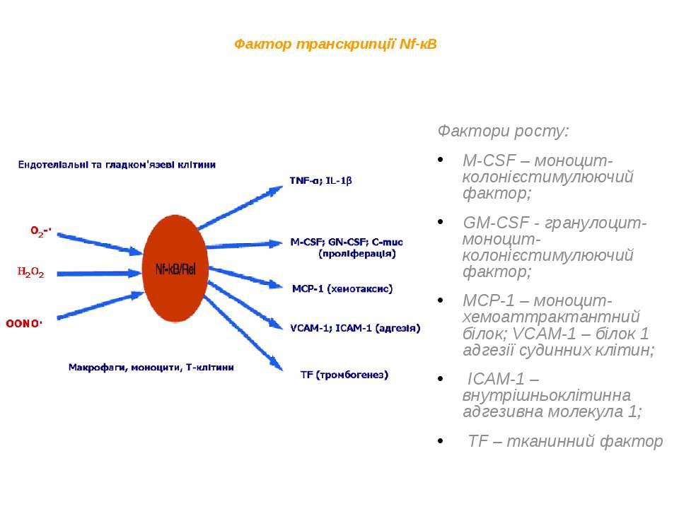 Фактор транскрипції Nf-кB Фактори росту: M-CSF – моноцит-колонієстимулюючий ф...