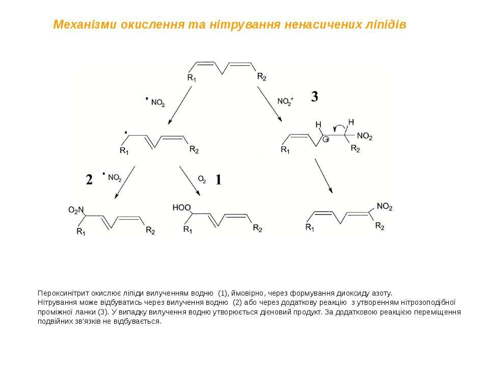 Пероксинітрит окислює ліпіди вилученням водню (1), ймовірно, через формування...
