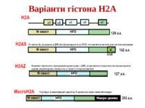 Варіанти гістона Н2А