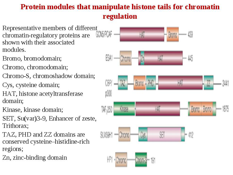 Protein modules that manipulate histone tails for chromatin regulation Repres...