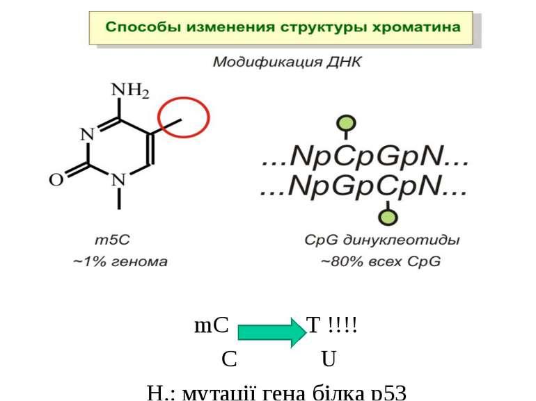mC Т !!!! С U Н.: мутації гена білка р53