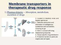 1) Pharmacokinetic – Absorption, metabolism, excretion of drugs 1. Located in...