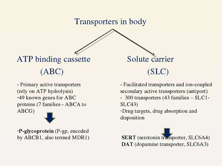 Transporters in body ATP binding cassette Solute carrier (ABC) (SLC) - Primar...