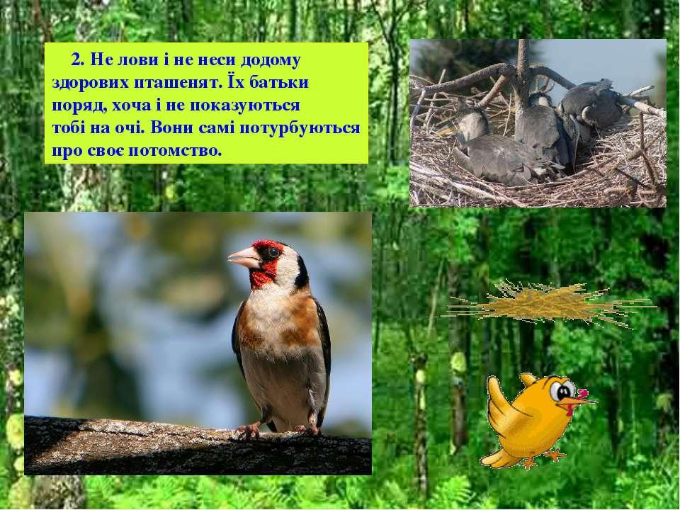 2. Не лови і не неси додому здорових пташенят. Їх батьки поряд, хоча і не пок...