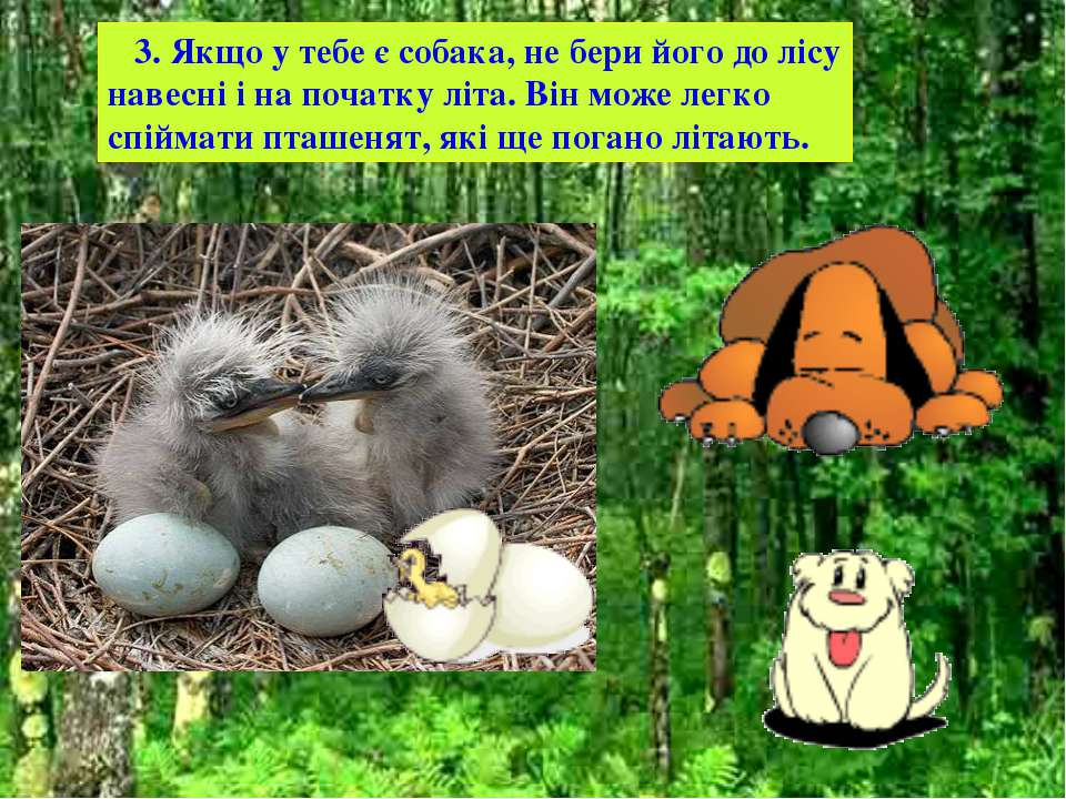 3. Якщо у тебе є собака, не бери його до лісу навесні і на початку літа. Він ...