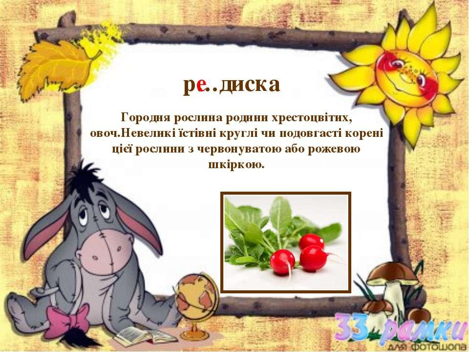 р…диска Городня рослина родини хрестоцвітих, овоч.Невеликі їстівні круглі чи ...