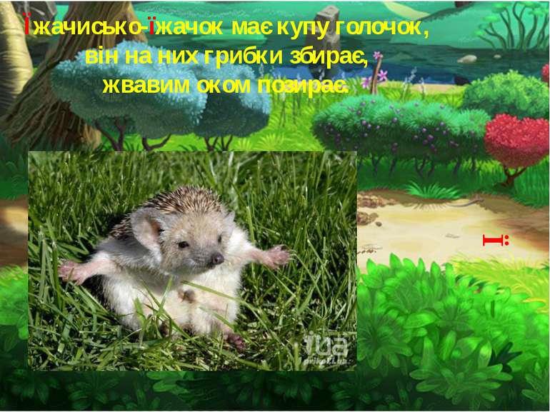 Ї Їжачисько-їжачок має купу голочок, він на них грибки збирає, жвавим оком по...