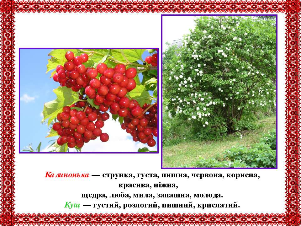 Калинонька — струнка, густа, пишна, червона, корисна, красива, ніжна, щедра, ...