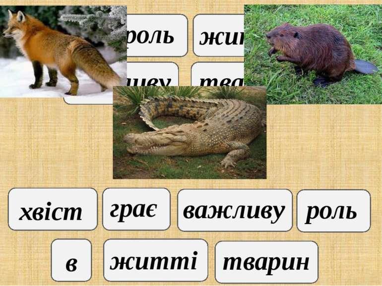 хвіст грає важливу роль в житті тварин хвіст грає важливу роль в житті тварин