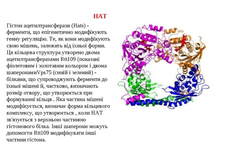 HAT Гістон ацетилтрансферази (Hats) - ферменти, що епігенетично модифікують г...