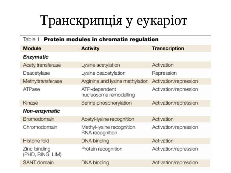 Транскрипція у еукаріот