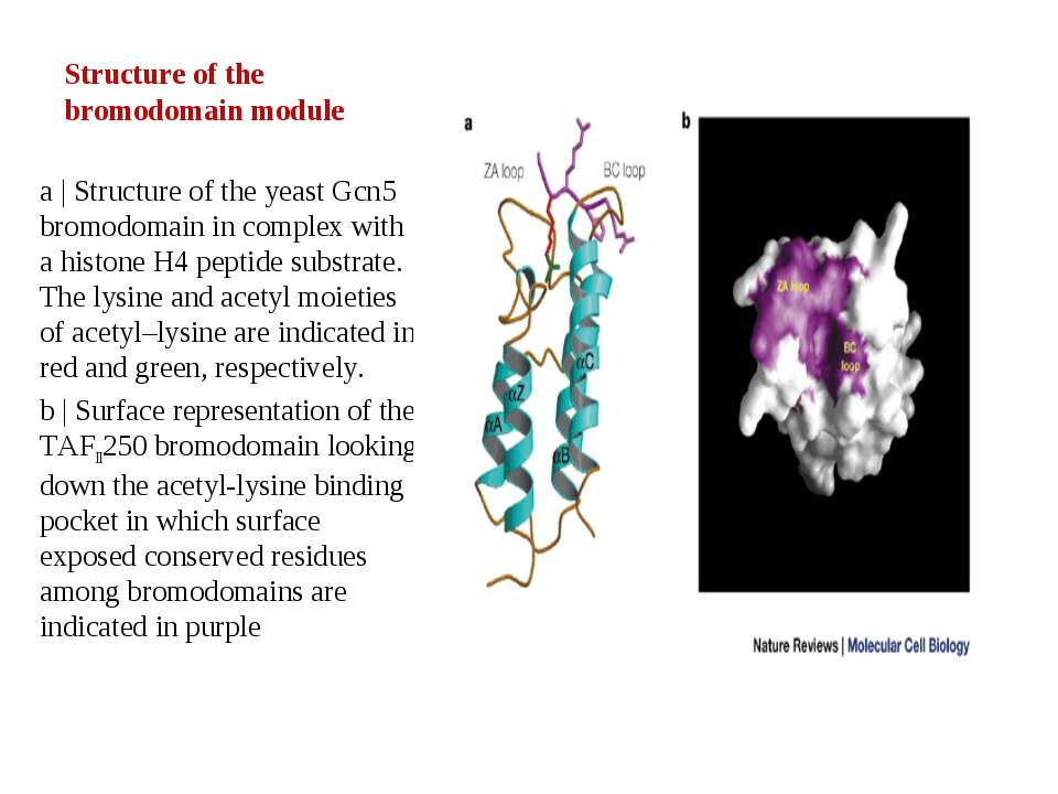 Structure of the bromodomain module a | Structure of the yeast Gcn5 bromodoma...