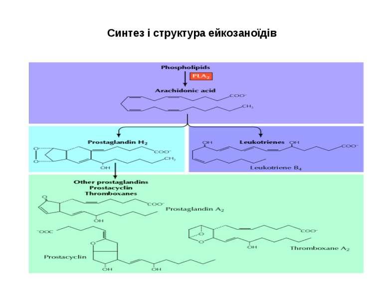 Синтез і структура ейкозаноїдів