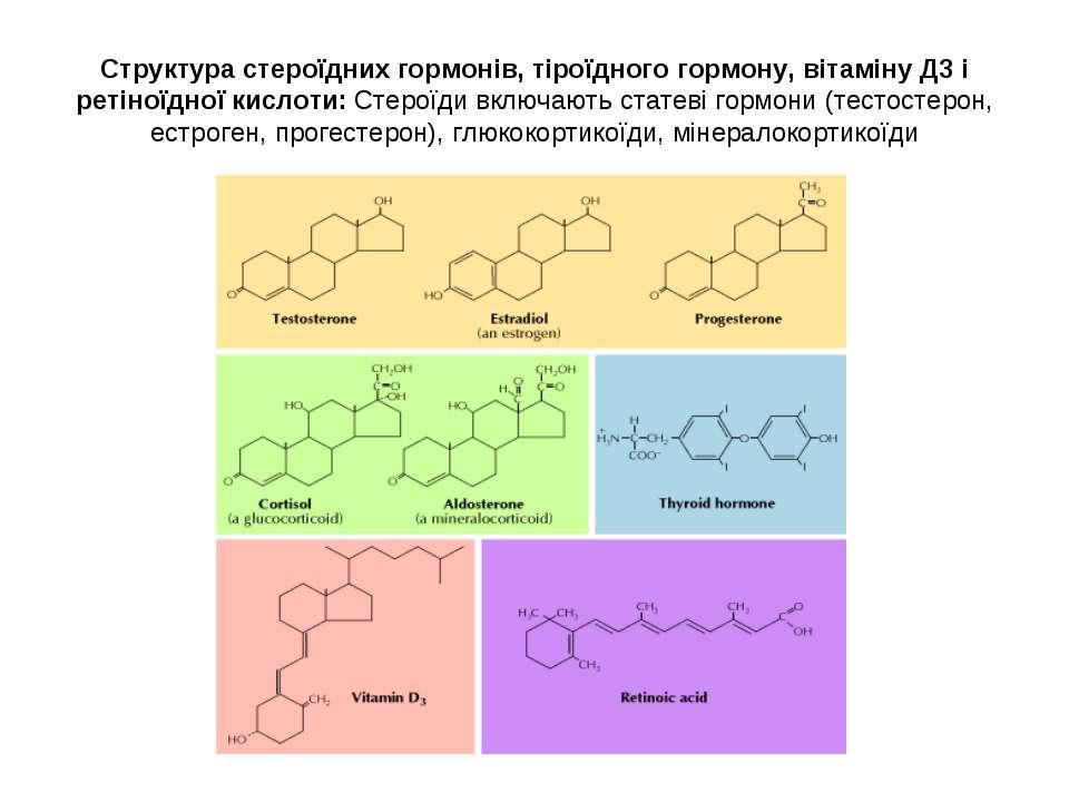Структура стероїдних гормонів, тіроїдного гормону, вітаміну Д3 і ретіноїдної ...