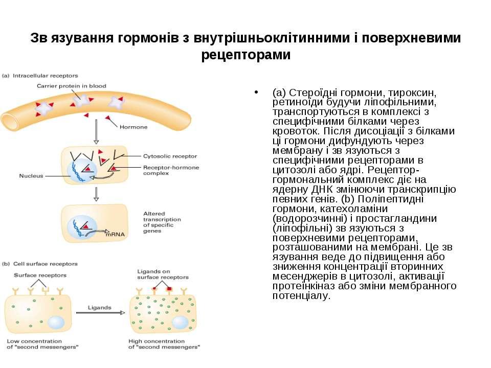 Зв язування гормонів з внутрішньоклітинними і поверхневими рецепторами (a) Ст...