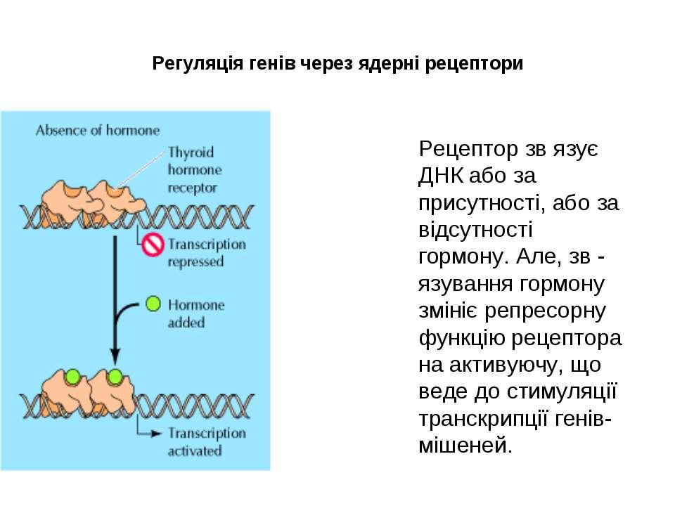 Регуляція генів через ядерні рецептори Рецептор зв язує ДНК або за присутност...