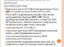 МЕХАНІЗМ ДІЇ КОМПЛЕКСІВ G1-ПЕРІОДУ. АКТИВАЦІЯ PRB Комплекси циклін D–Cdk4,6 ф...