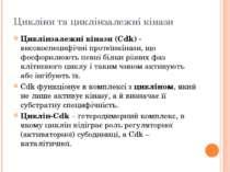 Цикліни та циклінзалежні кінази Циклінзалежні кінази (Cdk) - високоспецифічні...