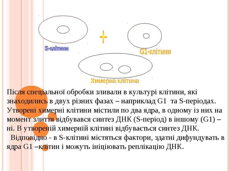 Після спеціальної обробки зливали в культурі клітини, які знаходились в двух ...