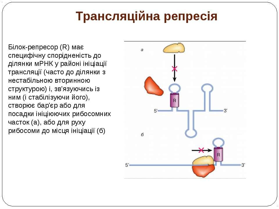 Трансляційна репресія Білок-репресор (R) має специфічну спорідненість до діля...