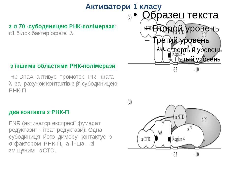 з σ 70 -субодиницею РНК-полімерази: с1 білок бактеріофага λ з іншими областям...