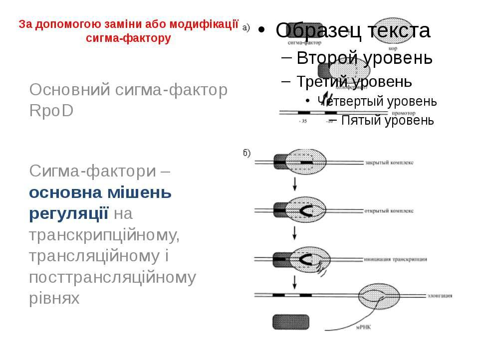 За допомогою заміни або модифікації сигма-фактору Основний сигма-фактор RpoD ...