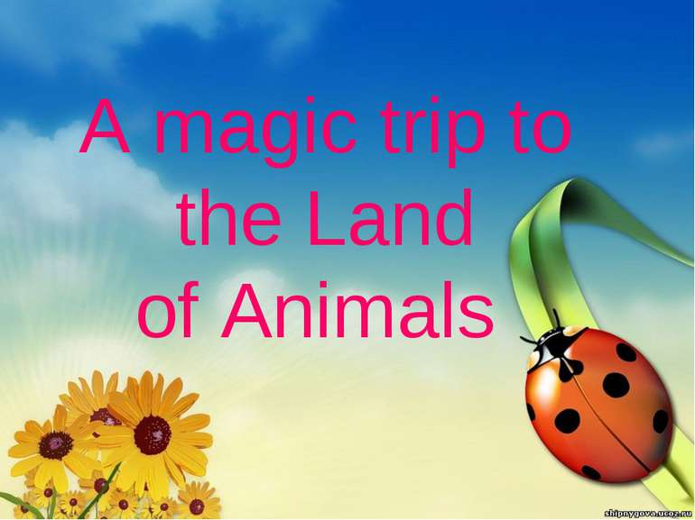 A magic trip to the Land of Animals