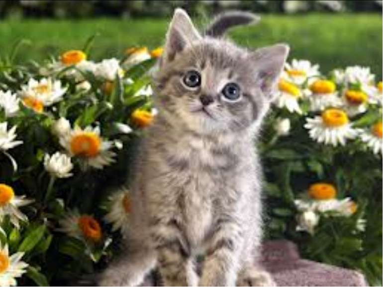 I am not small. I am not big. I can run, jump, climb. I like milk. I like m...