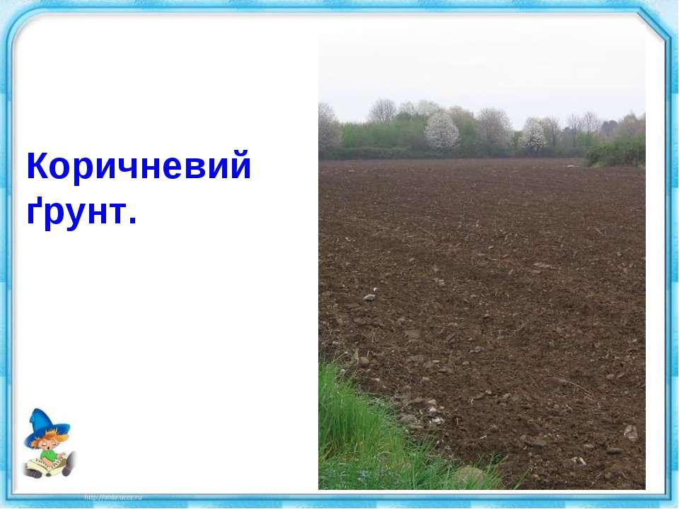 Коричневий ґрунт.
