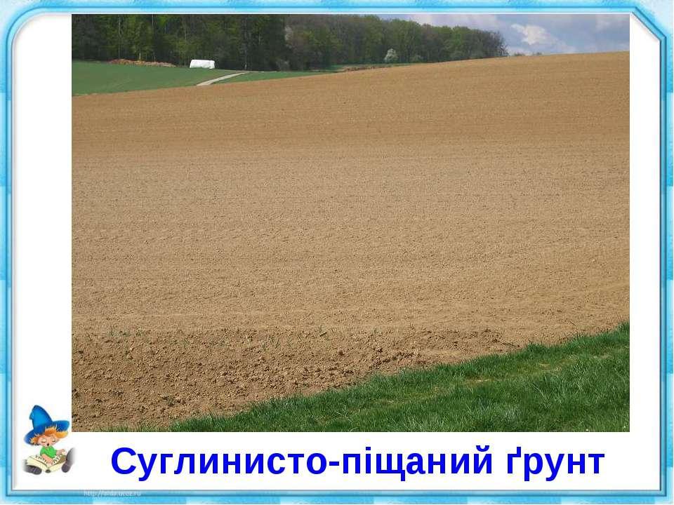 Суглинисто-піщаний ґрунт