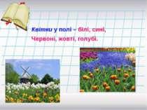 Квітки у полі – білі, сині, Червоні, жовті, голубі.