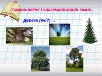 Дерева (які?) … Узагальнення і систематизація знань