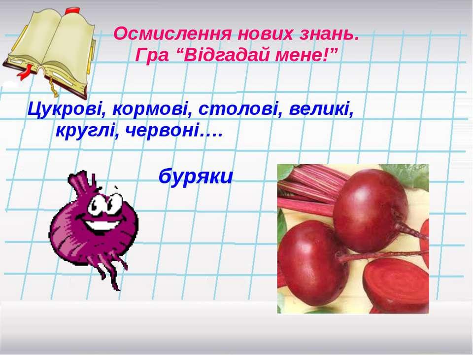 Цукрові, кормові, столові, великі, круглі, червоні…. Осмислення нових знань. ...