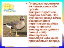 Плавальні перетинки на лапках качок або гусаків використовуються подібно весл...