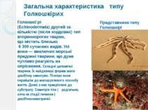 Загальна характеристика типу Голкошкірих Голкошкі рі (Echinodermata)другий з...